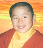 Kiwi Buddha