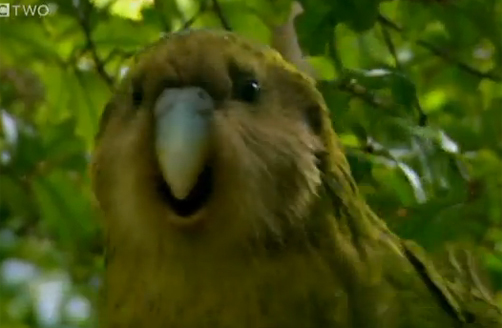 Stephen Fry Encounters a Kakapo