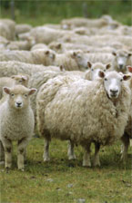 Extreme Shearing