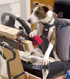 Canines Take To The Wheel