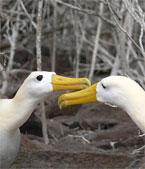 Multi-tasking Birds
