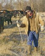 Missouri Dairy Kings