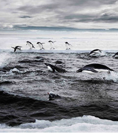 New Zealand Pledges to Continue Fight for Ross Sea