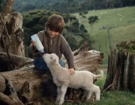 ASB Bank – A boy and His sheep