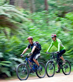 Exceptional Mountain Biking Trails Abound