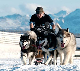 Kiwi Leads the Trail in Iconic Alaskan Sled-dog Race