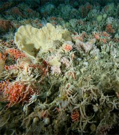 New Crustacean Species Could Unlock Secrets of the Deep