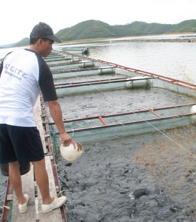China Tilapia Supplier Expanding His Farms