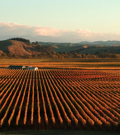 Americans Thirsty for NZ Wine Investments