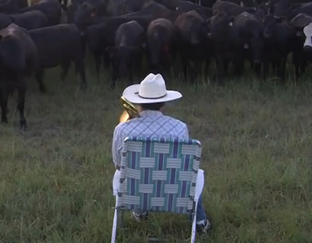 Lorde's Royals a hit with…the cows?