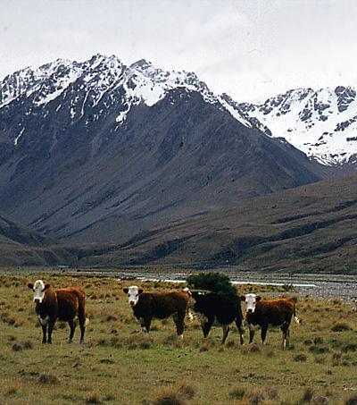 New Zealand Emissions Cut Breakthrough