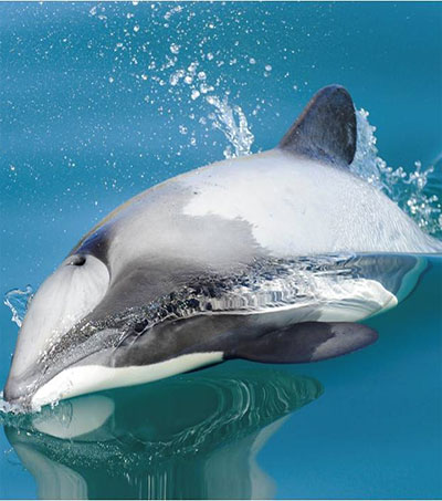 Domestic Market Key to Demise of Imperiled Dolphins