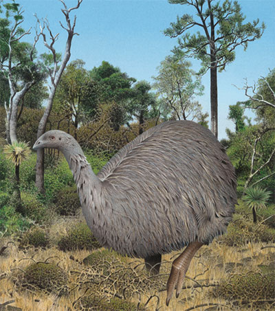 Moa's Range of Ecological Roles Irreplaceable