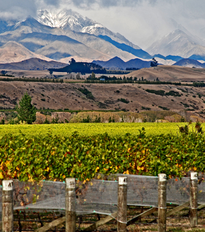 Record New Zealand Wine Exports