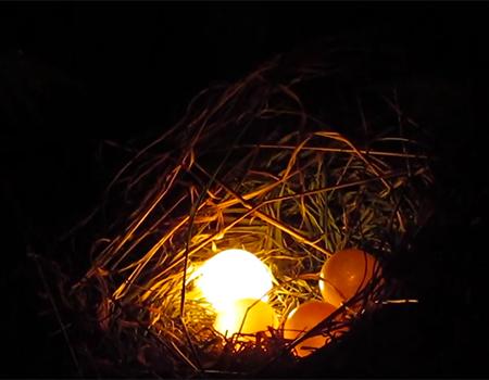 Talking Eggs – For the Birds, NZ Festival