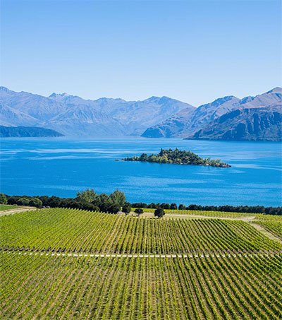 Wanaka Wines That Deliver a Taste of New Zealand
