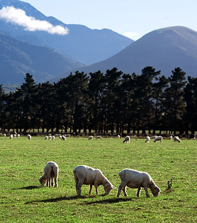 Bank of China (NZ) to Hold Agribusiness Investment and Trade Conference