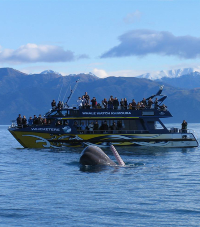 New Zealand's Sea of Wonders