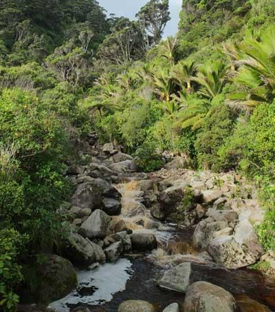 Indulge Your Wanderlust in New Zealand