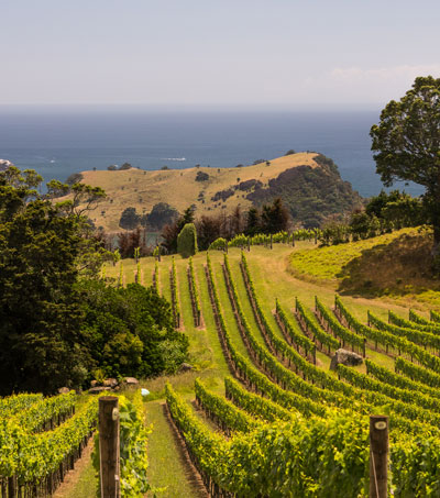 A Toast to New Zealand's Wine