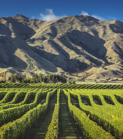 First-Rate Wines from Marlborough