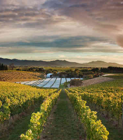 Discover New Zealand's Wine Regions