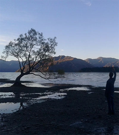 That Wanaka Tree a Social Media Sensation