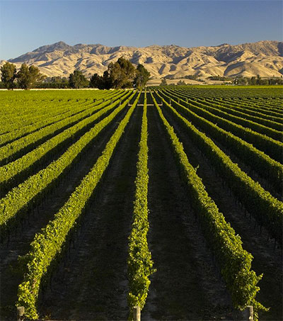 EDGE #259: Americans Prefer Pricier NZ Wines to Australian, Populism The New Black + Kiwis for Kiwi ++ more