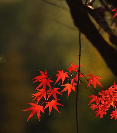 Japan's Landscapes Inspire Photographer Damon Bay