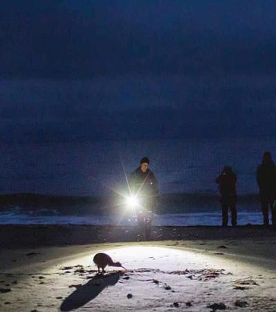 Wild Kiwi Experience On Stewart Island