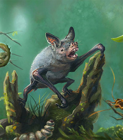 Extinct Giant Burrowing Bat Fossil Found in NZ