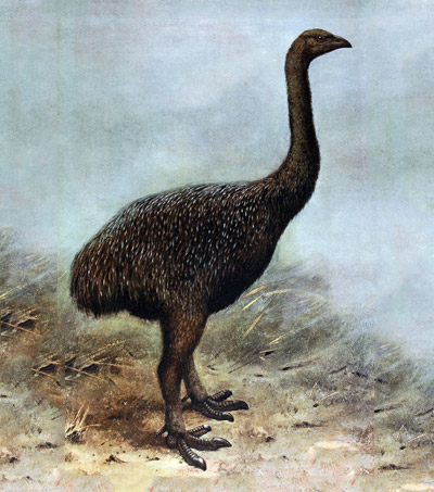 Fossil Poop Reveals Critical Role of Giant Birds in NZ'S Ecosystem
