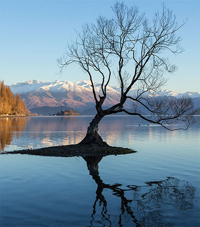 New Zealand's Role in Apocalypse Now