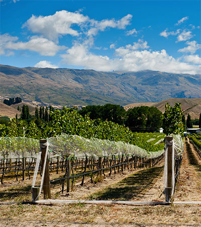 New Zealand's New Big Thing Is Pinot Noir