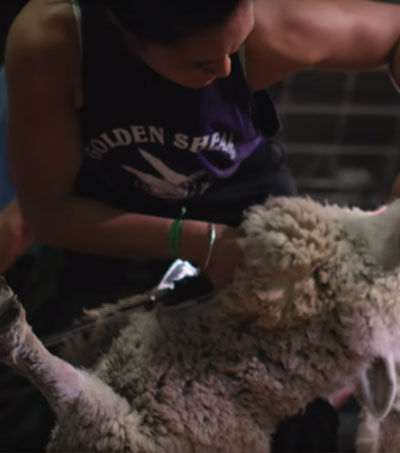 NZ's Shearing Women Wow on Screen
