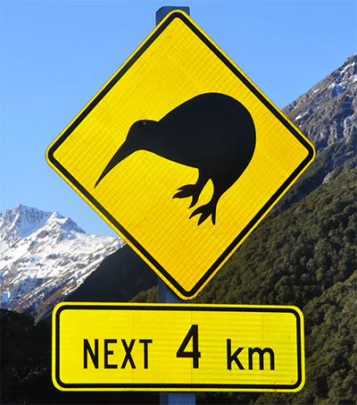 Kiwi To Be Reintroduced to Wellington