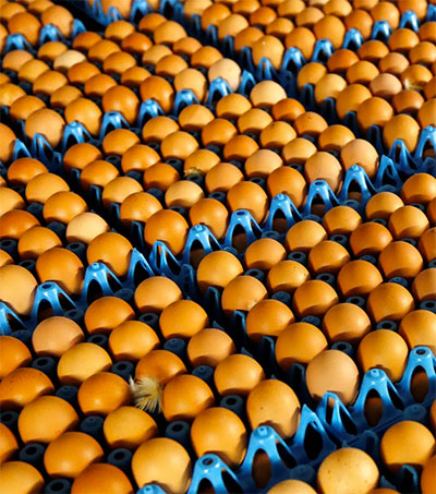 Egg Shortage as Farmers Scramble to Go Free-Range