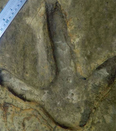 Perfectly Preserved Moa Prints Discovered