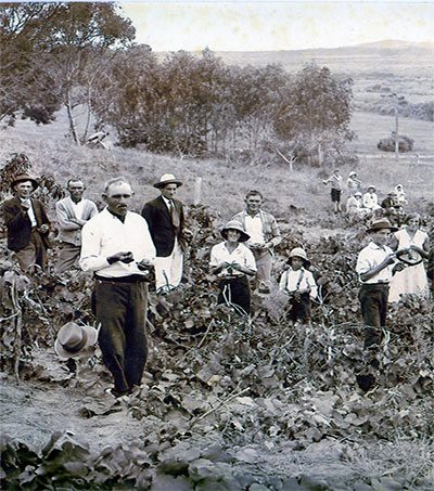 Pioneer Croatian Settlers in New Zealand