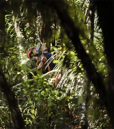 Scientists Climb Tane Mahuta to Help Save Kauri