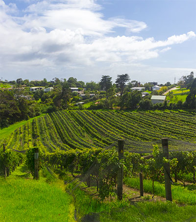 More to New Zealand White Wine than Sauvignon Blanc